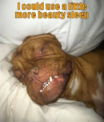 Dog beauty sleep